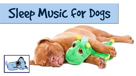 how to make your puppy sleep the song to help your sleep rmd09