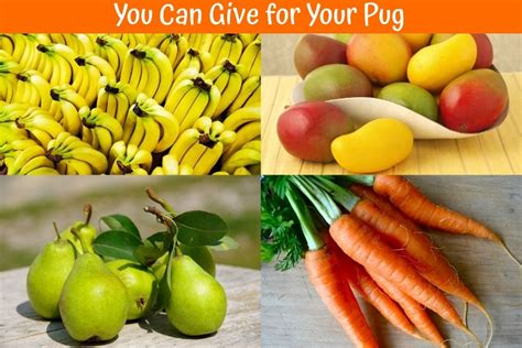 can pugs eat fruit 2018 s extensive guide for best food for pugs us bones