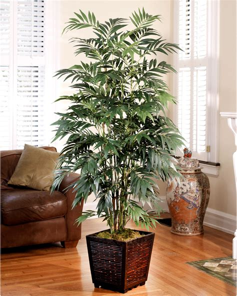 Attractive Where Can I Buy Christmas Trees #2: Trc117-06_zoom.jpg