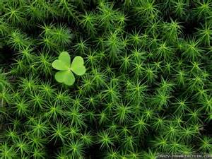 shamrock landscaping all about the places ireland landscape wallpapers