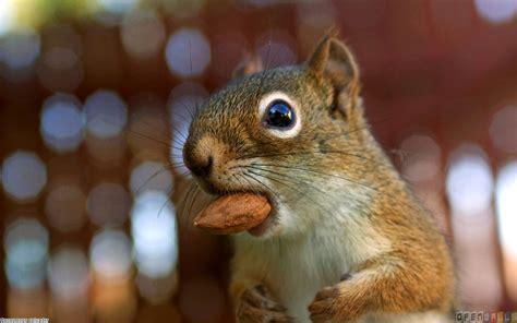 cute squirrel wallpaper 318 open walls