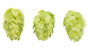 Afbeeldingsresultaten voor hop