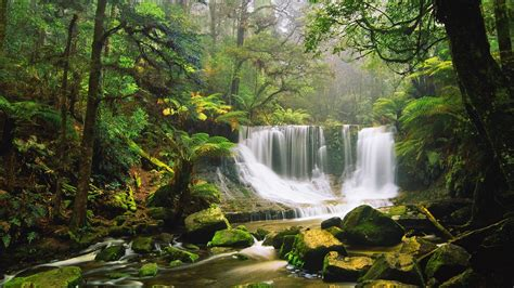 green wallpaper australia waterfall rocks moss green forest tree fern australian