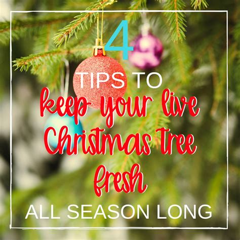 what put in water to keep tree fresh 4 ways to keep your live tree fresh all season