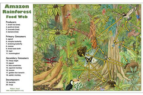 Which Animal Occupies A Rainforest Floor Niche - rainforest food web activity