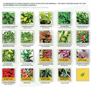 green wall plant types and designs