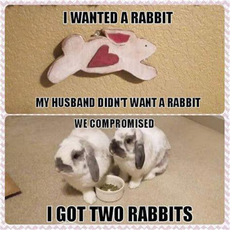 Silly Rabbit Meme - rabbit ramblings