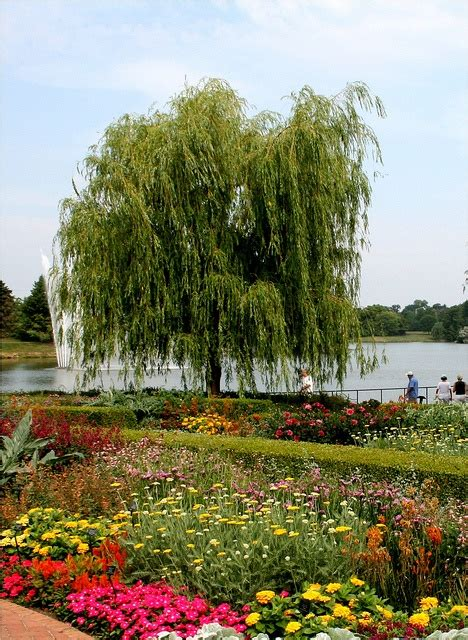 Chicago Botanic Garden Library 177 Best Evanston Il Images On Pinterest Chicago Evanston Illinois And Shore