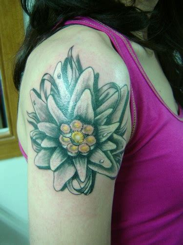 edelweiss tattoo the world s catalog of ideas