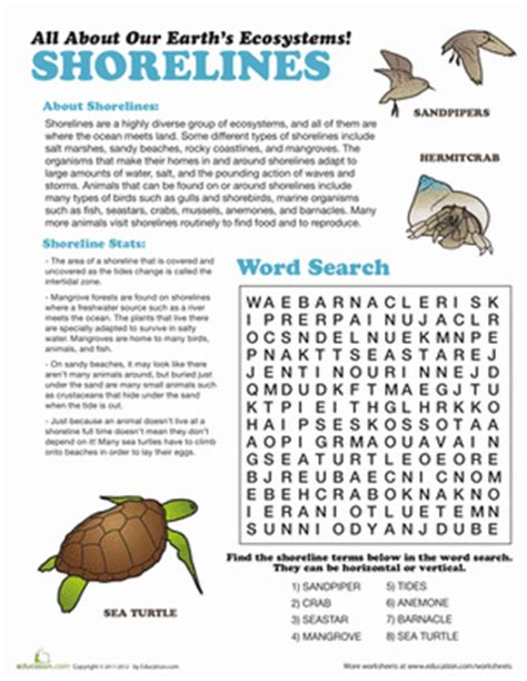 Science Worksheets Middle School by Shoreline Ecosystem Worksheet Education