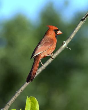 west virginia bird identification usa today