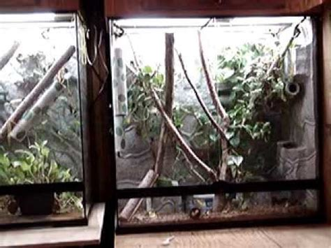 tokay gecko cages exo terra largex tall youtube