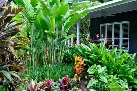 Tropical Garden Plants by Our Australian Gardens Tabu Tropical Paradise In Cairns