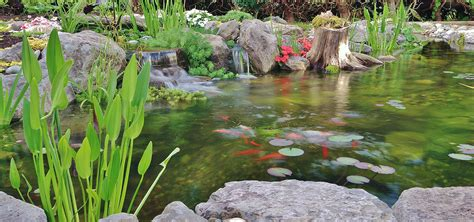 is a backyard pond an ecosystem is a backyard pond an ecosystem streamworksdesigns com