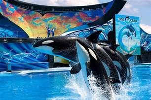 Seaworld And Busch Gardens by Seaworld Orlando And Busch Gardens Ta Make Ticket