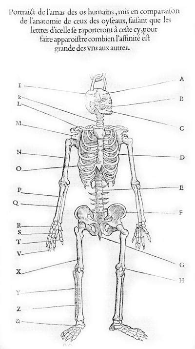diagram of the skeletal system worksheet 4 best images of printable bone worksheets free
