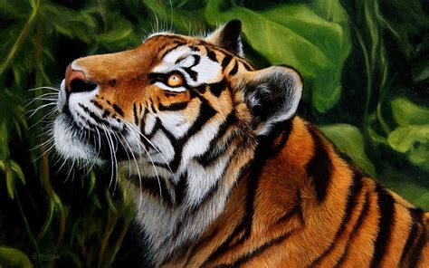 tiger paint wildlife prints limited edition wildlife prints