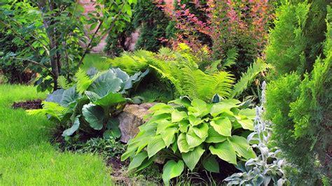 Ard Ratgeber Garten by Geh 246 Lze Im Garten B 228 Ume Und Str 228 Ucher Aussuchen Garten Ratgeber Themen Br De