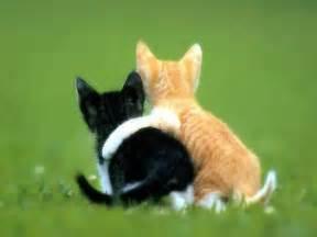 gambar foto kucing lucu imut 1 jongose