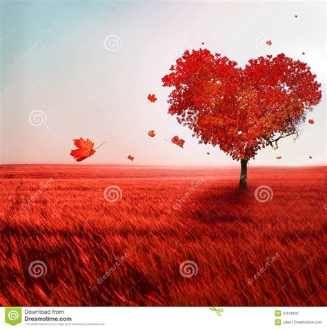 tree  love stock image image  colorful lonely