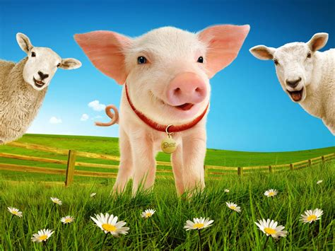 the sheep pig win a family ticket to see quot the sheep pig quot the hearty life