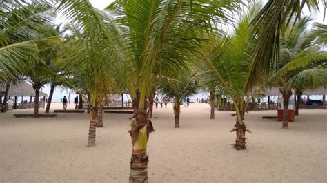 pondicherry boat house coconut trees on the island picture of chunnambar boat house pondicherry tripadvisor