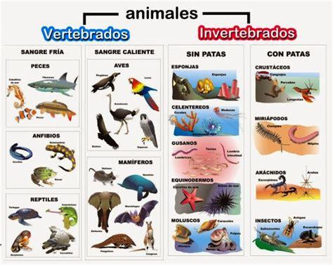 animales vertebrados donde viven como nacen clasificaci 243 n de los animales reino animal