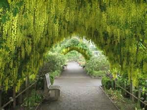 tips for choosing climbing plants for arbors trellises or