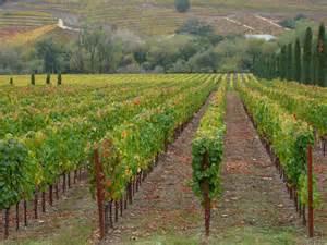 Carano Vineyards Winery File Carano Vineyard In Creek Jpg Wikimedia