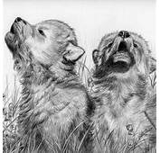 Pencil Drawings Of Wolves Howling  Car Interior Design