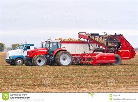 Galerry harvest of sugar beets stock photo cartoondealer com