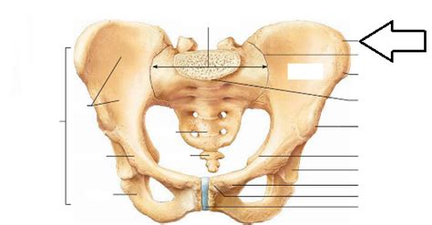 iliac crest diagram 301 moved permanently