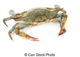 blaue krabben dekorationen meeresfr 252 chte stock fotos und bilder 317 107