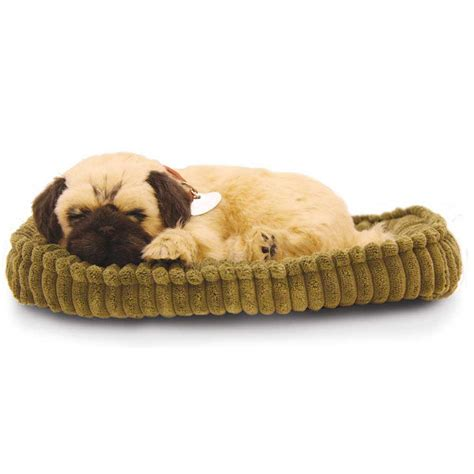 petzzz puppy pug puppy by petzzz precious petzzz