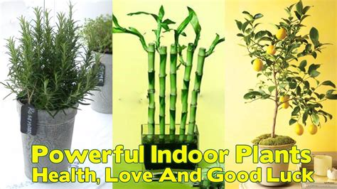 the best plants to bring life to your bathroom 12 powerful indoor plants that are known to bring you good