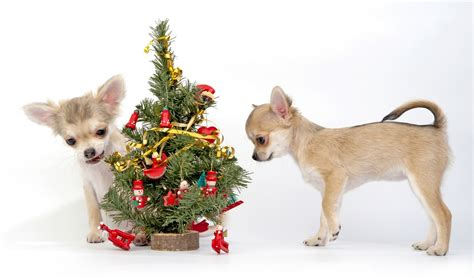 safeguard for dogs 8 artificial trees that are safe for dogs