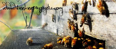 Bee Traning bee keeping india
