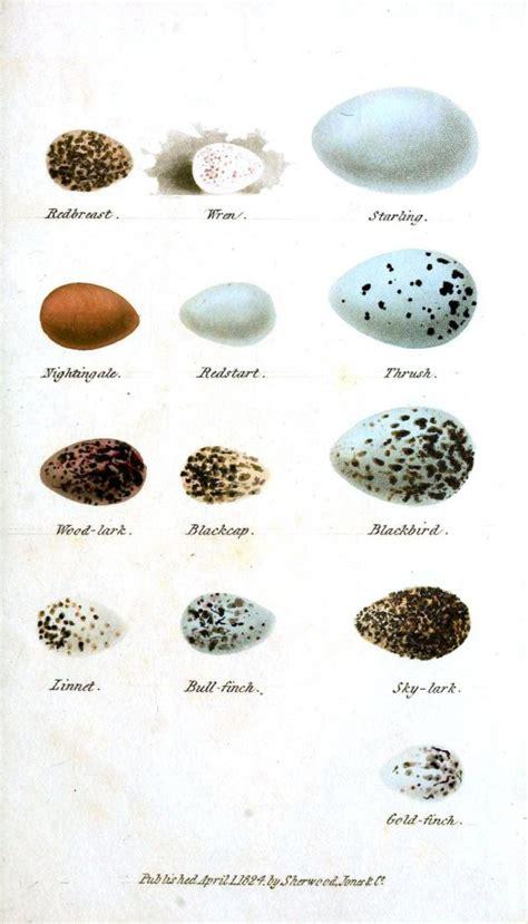 Animal Egg animal eggs and nests vintage printable at swivelchair