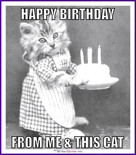 Birthday Cat Meme - happy birthday memes with funny cats dogs and cute animals