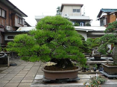 Garten Bonsai Selber Machen 4485 by Japanischer Garten Bonsai Dorf Tokyo
