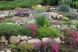 piante per giardino roccioso perenni piante perenni per giardino roccioso vivaio le clos d