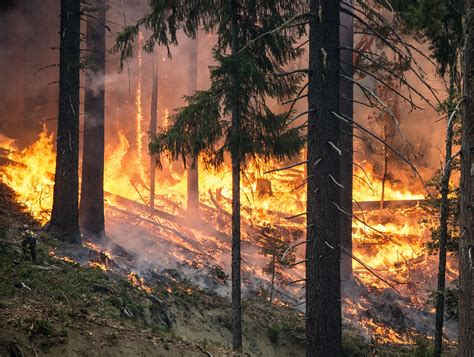 forest fire  stock photo public domain pictures