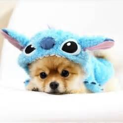 Squirrel Halloween Costume 20 Cute Dogs Ideas Cute Baby Dogs