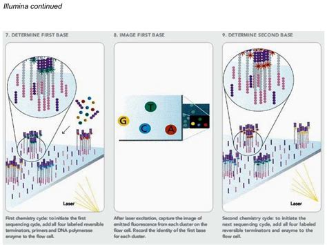 illumina gene sequencing nanohub org resources illinois phys550 lecture 25