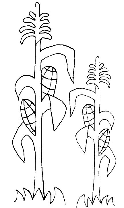 corn stalk template corn stalks coloring pages coloring pages