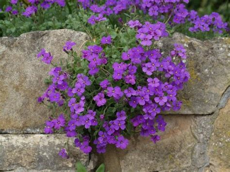 Rock Garden Flowers Garden Project A Rock Garden Plants Www Coolgarden Me
