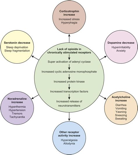 Can A Baby Detox Form Opiates In The Womb by Neonatal Abstinence State Of The Review