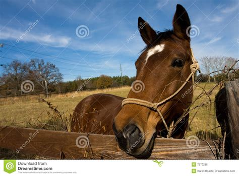 horse outside horse in field royalty free stock image image 7570286