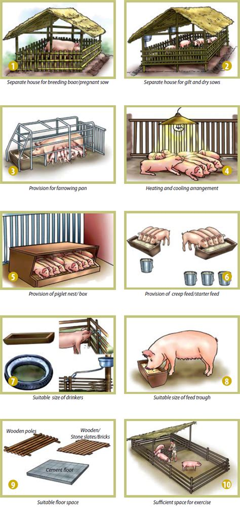 small scale pig housing plans small scale pig housing plans numberedtype