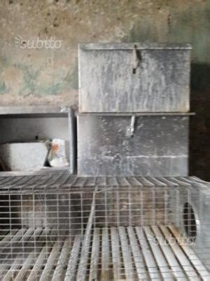 gabbia conigli usata gabbia per conigli in legno nuova spedizione posot class